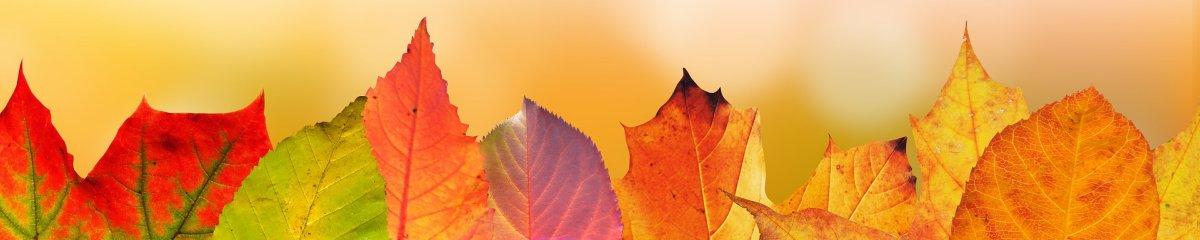 Banner Klavier Herbst